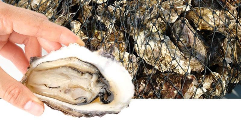 濃厚でクリーミーな牡蠣の味わい