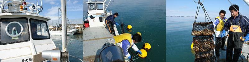 仙鳳趾産の牡蠣は獲れたてを産地から直送