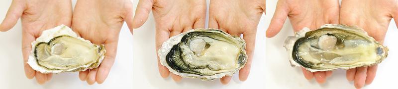 小さいものから大きな牡蠣までお好みで選べます