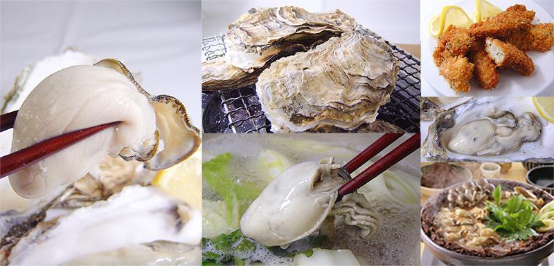 生牡蠣、カキフライ、色々なカキ料理をお楽しみください。