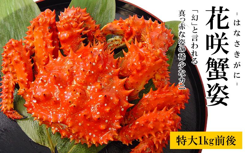 超特大花咲蟹