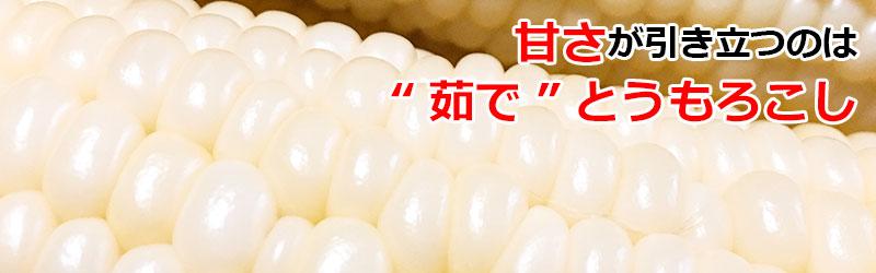 ピュアホワイト
