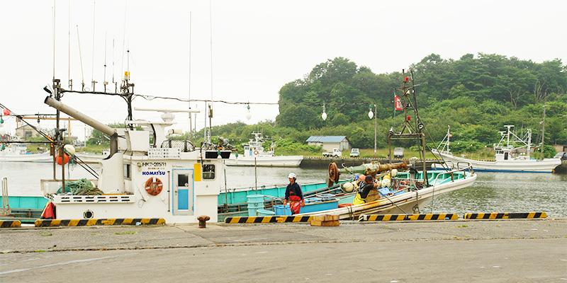 虎杖浜の毛ガニ漁は厳しい漁獲制限付き