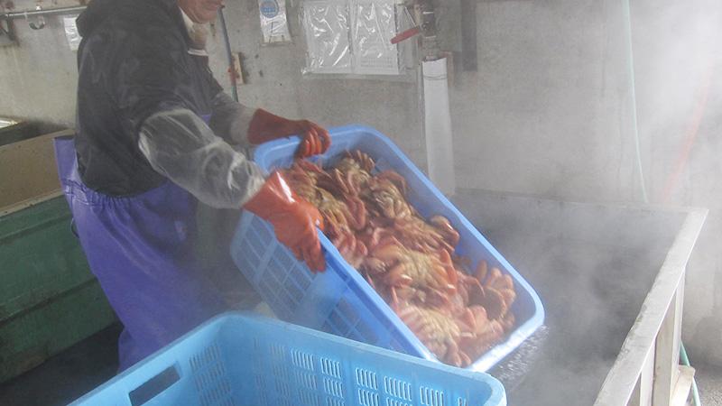 虎杖浜港で水揚げされた毛ガニの茹で上げ