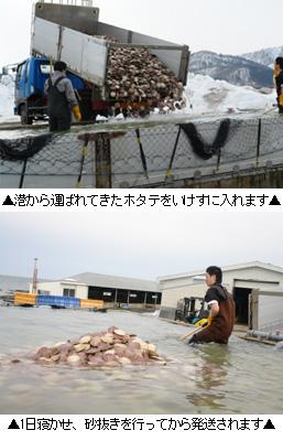 猿払産活ホタテ(貝付き帆立)