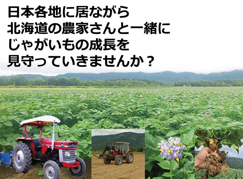 北海道産きたあかりシェアリング(オーナー権)