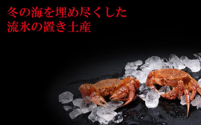流氷の下で栄養を蓄えた毛蟹