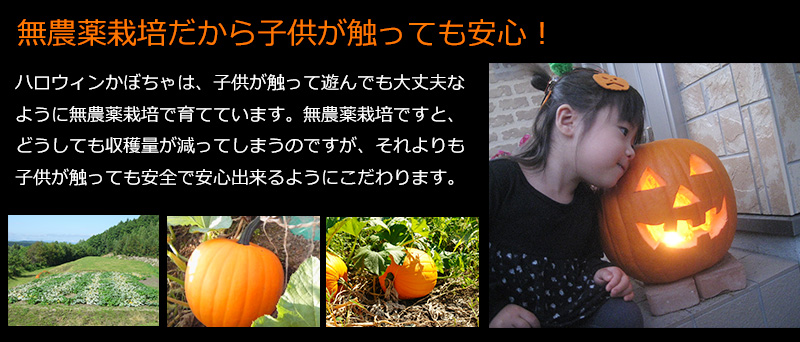 ハロウィンかぼちゃ2017
