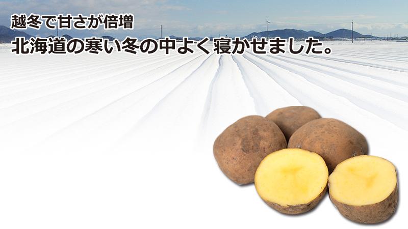 北海道産越冬インカのめざめ