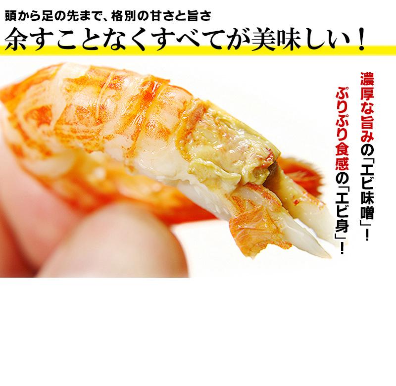 北海道根室産北海シマエビ500g(30-35尾前後)